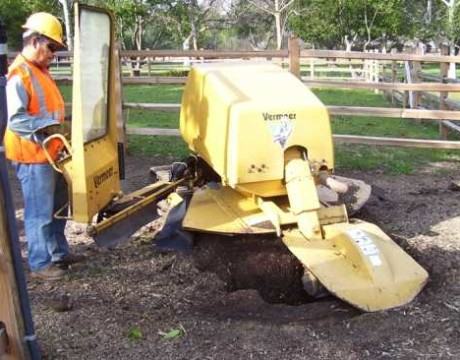 stump-grinding-malibu-ca-460x360